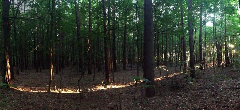 światło w lesie